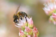 Biene stockbilder