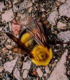 Biene alle können Sie sein Stockfoto