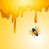 Biene auf Bienenwabe Lizenzfreie Stockfotos