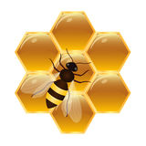 Biene auf Bienenwaben Lizenzfreies Stockbild