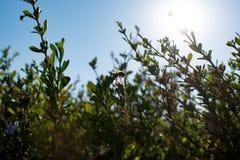 Biene auf Blume mit Sonne von hinten stockbilder