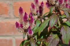 Biene auf Blumen Stockfoto
