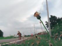 Biene auf dem folwer im Garten mit Unschärfehintergrund stockfoto