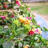 Biene auf der Blume lizenzfreie stockbilder