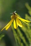Biene auf der Blume stockfotos