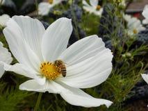 Biene auf der Blume stockfoto
