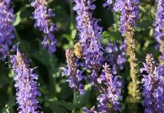 Biene auf einem Blumenbett lizenzfreie stockfotografie
