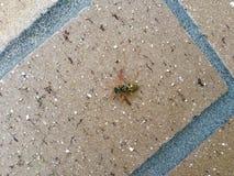 Biene auf einem Ziegelstein Lizenzfreie Stockfotos