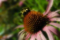 Biene auf einer rosafarbenen Blume Stockfotos