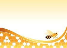 Biene auf Honig-Zellen vektor abbildung