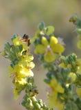 Biene bei der Arbeit Stockbild