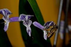 Biene in der Blüte Stockbilder