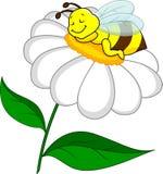 Biene, die auf Blume schläft Lizenzfreies Stockfoto
