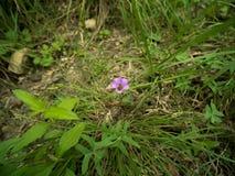 Biene, die auf einer vibrierenden purpurroten Blume stillsteht stockfotografie