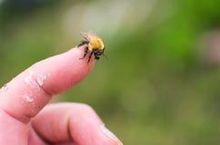 Biene, die auf menschlichem Finger sitzt lizenzfreie stockfotos