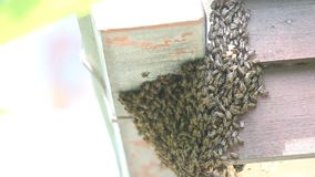 Biene, die Bienenstock macht stock video
