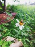 Biene, die nach Honig sucht lizenzfreies stockbild