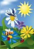 Biene ein Marienkäfer eine Libelle Lizenzfreie Stockfotos