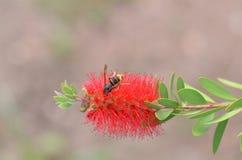 Biene in einer Blume stockbild