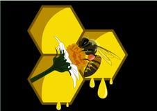 Biene in einer Blume mit schwarzem Hintergrund lizenzfreies stockbild