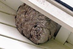 Biene fängt zu Hause ein Stockfotografie