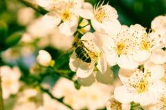 Biene gehockt auf einer Blume Stockbilder