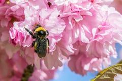 Biene im Druide-Park Maryland stockbild