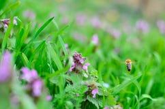 Biene im Flug Stockbild