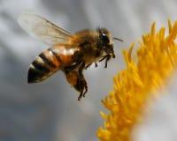 Biene im Flug stockfoto