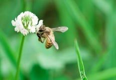 Biene im Herbst Lizenzfreies Stockbild
