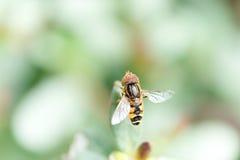 Biene im Herbstpark Stockbilder