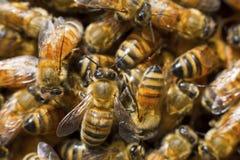 Biene innen zur Natur lizenzfreie stockfotografie