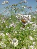 Biene mit Blume Lizenzfreies Stockfoto