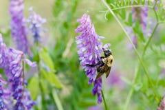 Biene mit Farbe Stockfotografie