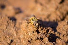 Biene oder Fliege lizenzfreies stockfoto