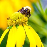 Biene sich Lizenzfreies Stockbild