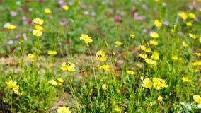 Biene sind auf der gelben Blume Stockfotos