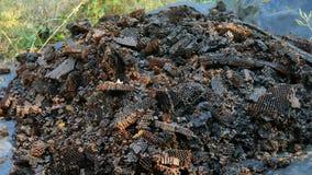 Biene slumgum Bienen und Wespen essen Reste Bienenbienenwaben stock footage