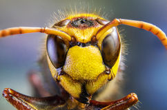 Biene, Tauschen, Honig, Hintergrundblumeninsekten Lizenzfreie Stockfotos