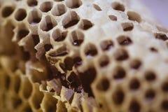 Biene und Bienenwabenclosup und -makroschuß Stockbilder