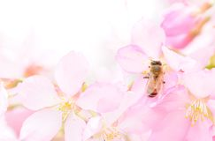 Biene und Blume stockfotografie