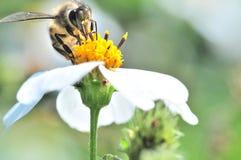 Biene und Blume stockbilder