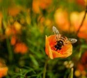Biene und Blume Lizenzfreies Stockbild