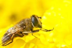 Biene und Blume Lizenzfreie Stockfotos