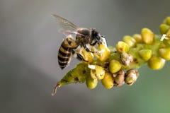 Biene und Blume Lizenzfreie Stockbilder