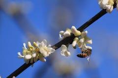 Biene und Blume Lizenzfreies Stockfoto