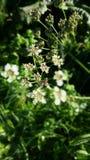 Biene und Blume Stockbild