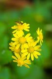 Biene und Blumen Stockfotos