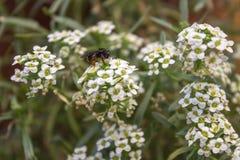 Biene und eine Blume stockbild