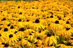 Biene und gelbe Blumen Stockfotografie